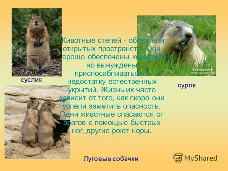 Животные степей - обитатели открытых пространств. Они хорошо обеспечены кормами, но вынуждены приспосабливаться к недостатку естественных укрытий. Жизнь их часто зависит от того, как скоро они успели заметить опасность. Одни животные спасаются от вра