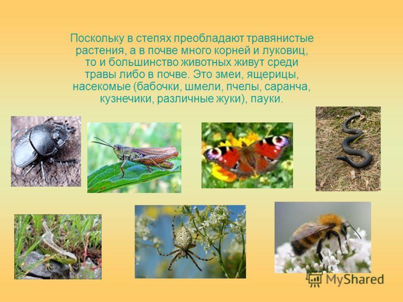 Поскольку в степях преобладают травянистые растения, а в почве много корней и луковиц, то и большинство животных живут среди травы либо в почве. Это змеи, ящерицы, насекомые (бабочки, шмели, пчелы, саранча, кузнечики, различные жуки), пауки.