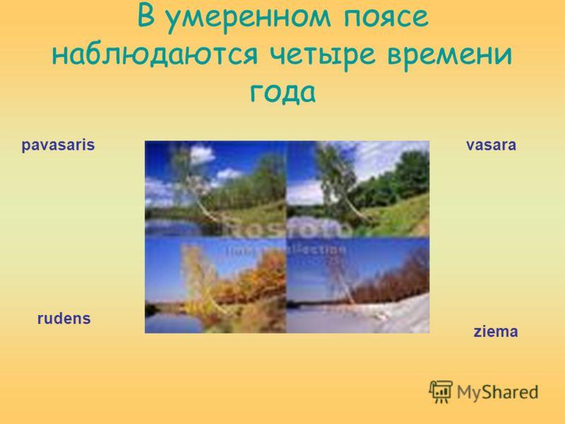 В умеренном поясе наблюдаются четыре времени года pavasaris rudens vasara ziema