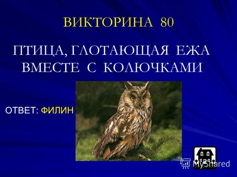 ВИКТОРИНА 80 ПТИЦА, ГЛОТАЮЩАЯ ЕЖА ВМЕСТЕ С КОЛЮЧКАМИ ОТВЕТ: ФИЛИН