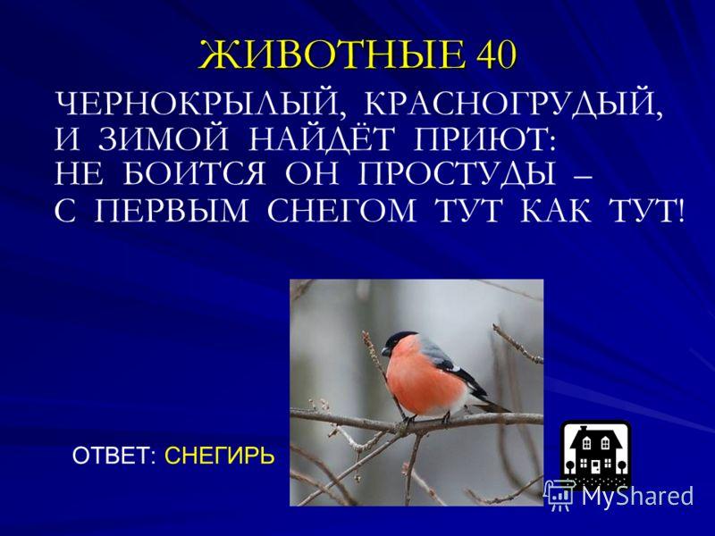 ЖИВОТНЫЕ 40 ЧЕРНОКРЫЛЫЙ, КРАСНОГРУДЫЙ, И ЗИМОЙ НАЙДЁТ ПРИЮТ: НЕ БОИТСЯ ОН ПРОСТУДЫ – С ПЕРВЫМ СНЕГОМ ТУТ КАК ТУТ! ОТВЕТ: СНЕГИРЬ