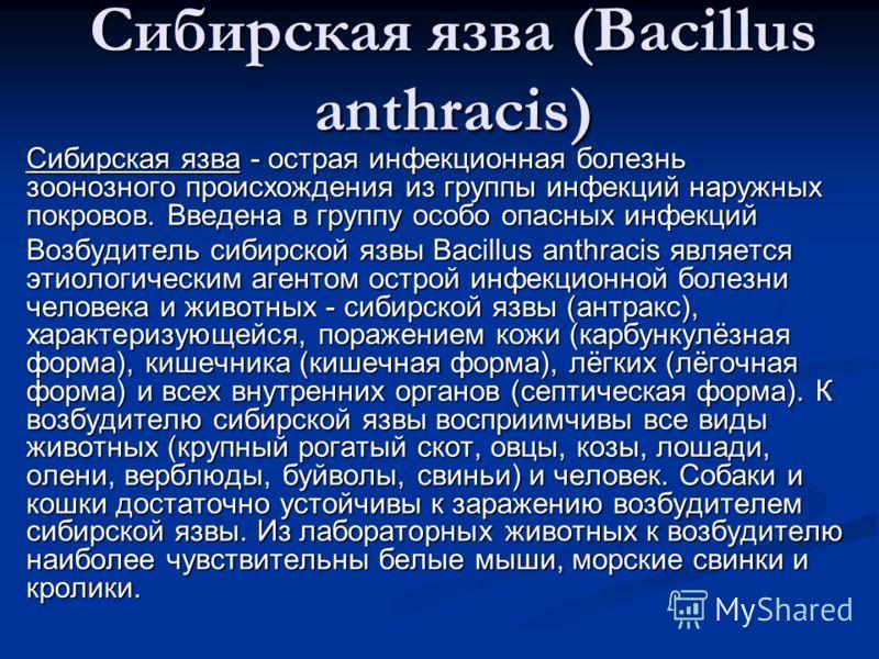 Сибирская язва (Вacillus anthracis) Сибирская язва - острая инфекционная болезнь зоонозного происхождения из группы инфекций наружных покровов. Введена в группу особо опасных инфекций Возбудитель сибирской язвы Bacillus anthracis является этиологичес