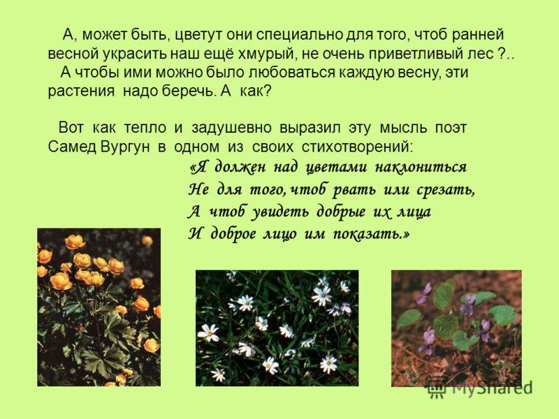 А, может быть, цветут они специально для того, чтоб ранней весной украсить наш ещё хмурый, не очень приветливый лес ?.. А чтобы ими можно было любоваться каждую весну, эти растения надо беречь. А как? Вот как тепло и задушевно выразил эту мысль поэт