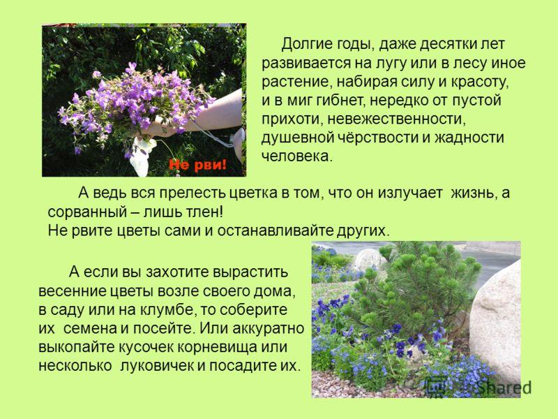 А ведь вся прелесть цветка в том, что он излучает жизнь, а сорванный – лишь тлен! Не рвите цветы сами и останавливайте других. Долгие годы, даже десятки лет развивается на лугу или в лесу иное растение, набирая силу и красоту, и в миг гибнет, нередко