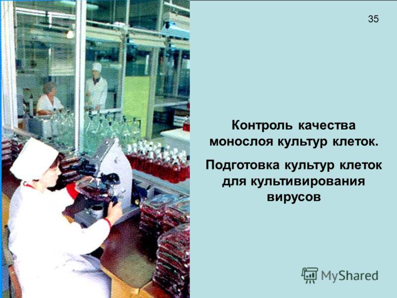 Контроль качества монослоя культур клеток. Подготовка культур клеток для культивирования вирусов 35