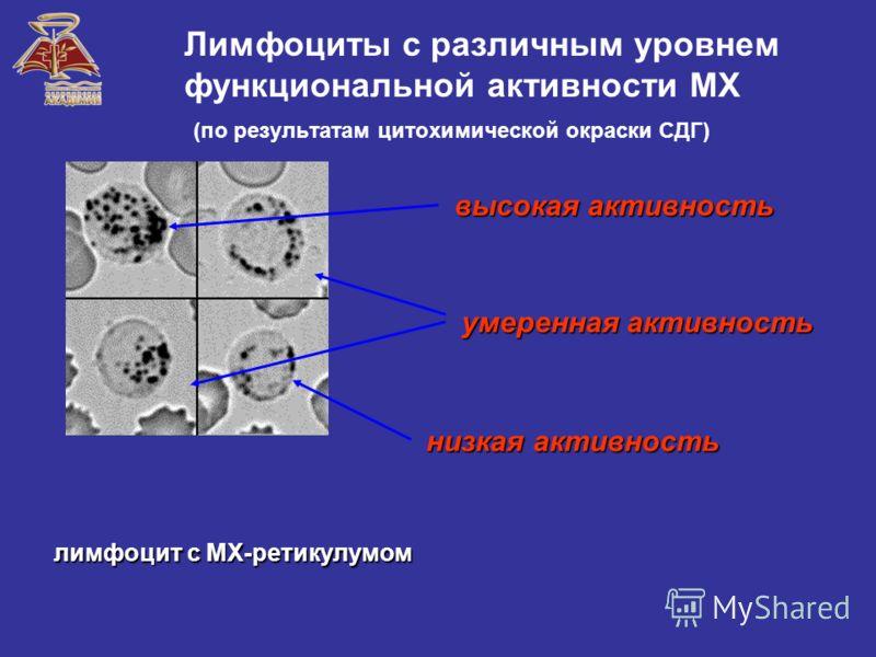 Лимфоциты с различным уровнем функциональной активности МХ (по результатам цитохимической окраски СДГ) лимфоцит с МХ-ретикулумом высокая активность умеренная активность низкая активность