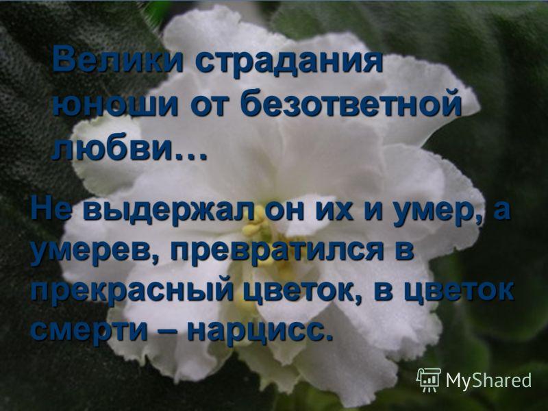 Велики страдания юноши от безответной любви… Не выдержал он их и умер, а умерев, превратился в прекрасный цветок, в цветок смерти – нарцисс.