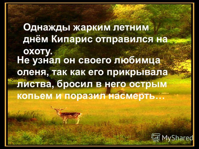 Однажды жарким летним днём Кипарис отправился на охоту. Не узнал он своего любимца оленя, так как его прикрывала листва, бросил в него острым копьем и поразил насмерть…