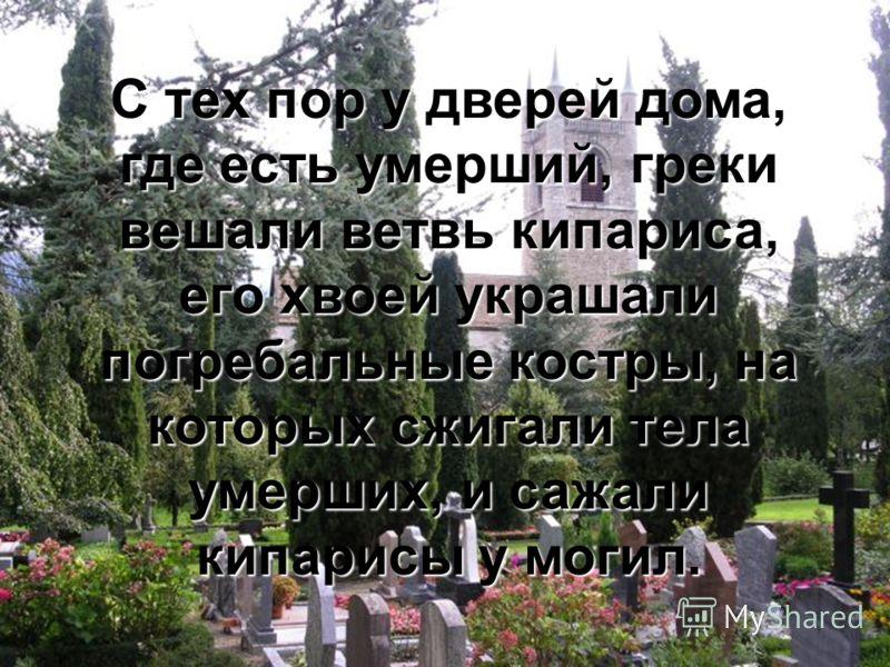 С тех пор у дверей дома, где есть умерший, греки вешали ветвь кипариса, его хвоей украшали погребальные костры, на которых сжигали тела умерших, и сажали кипарисы у могил.