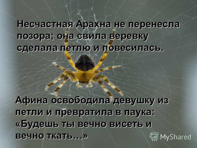 Несчастная Арахна не перенесла позора; она свила веревку сделала петлю и повесилась. Афина освободила девушку из петли и превратила в паука: «Будешь ты вечно висеть и вечно ткать…»