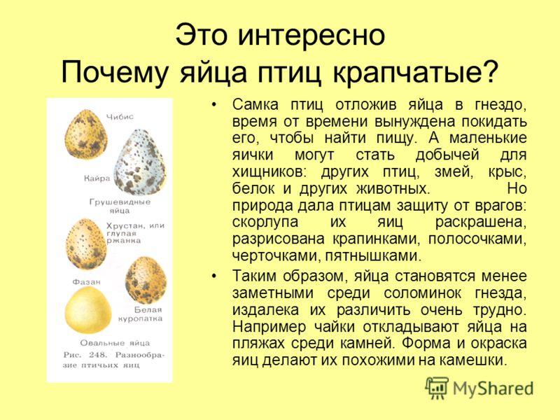 Это интересно Почему яйца птиц крапчатые? Самка птиц отложив яйца в гнездо, время от времени вынуждена покидать его, чтобы найти пищу. А маленькие яички могут стать добычей для хищников: других птиц, змей, крыс, белок и других животных. Но природа да