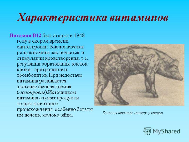 Характеристика витаминов Витамин В12 был открыт в 1948 году в скором времени синтезирован. Биологическая роль витамина заключается в стимуляции кроветворения, т.е. регуляции образования клеток крови - эритроцитов и тромбоцитов. При недостаче витамина