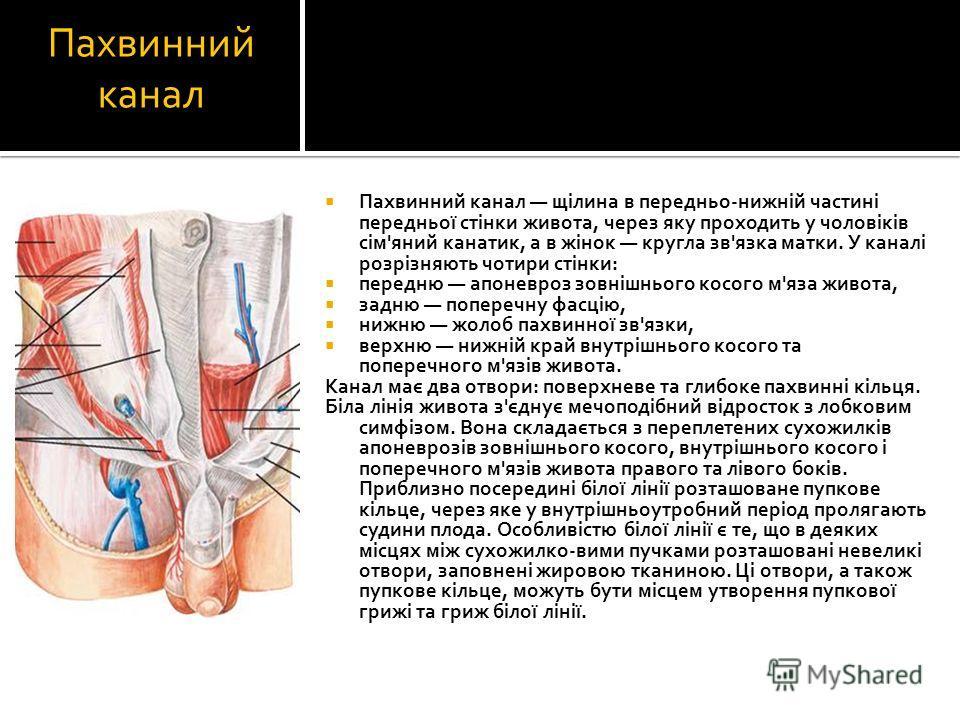 Пахвинний канал Пахвинний канал щілина в передньо-нижній частині передньої стінки живота, через яку проходить у чоловіків сім'яний канатик, а в жінок кругла зв'язка матки. У каналі розрізняють чотири стінки: передню апоневроз зовнішнього косого м'яза