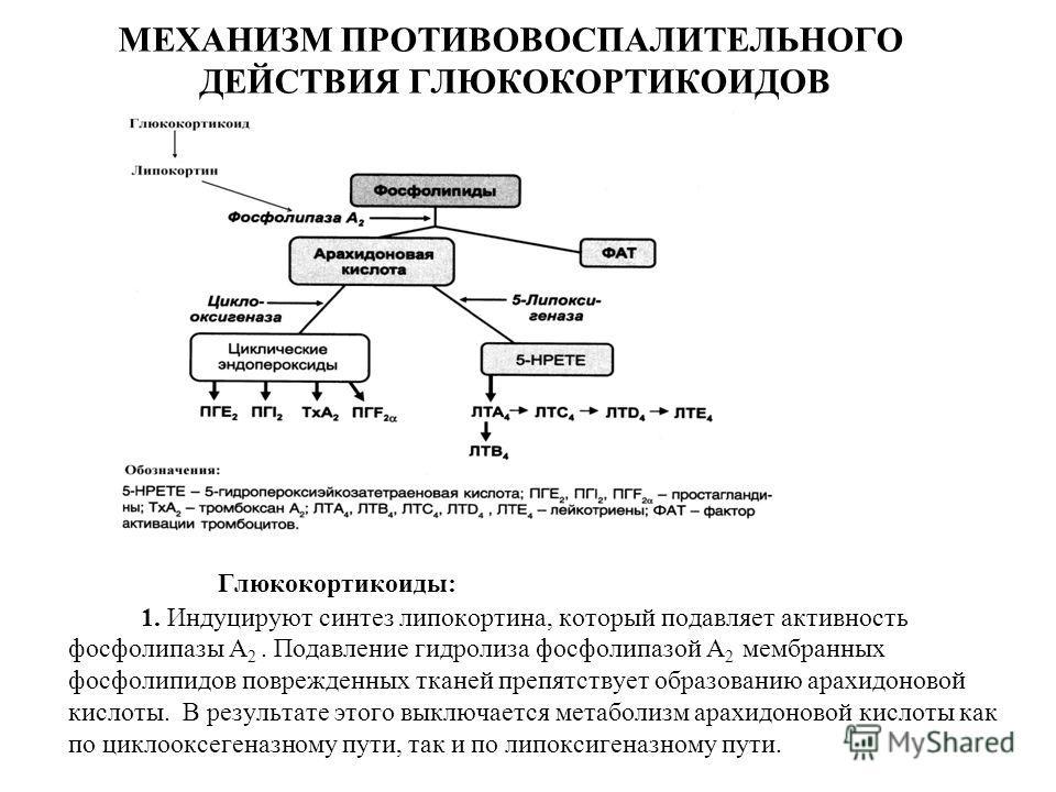 Глюкокортикостероиды синтез регуляции equipoise horse