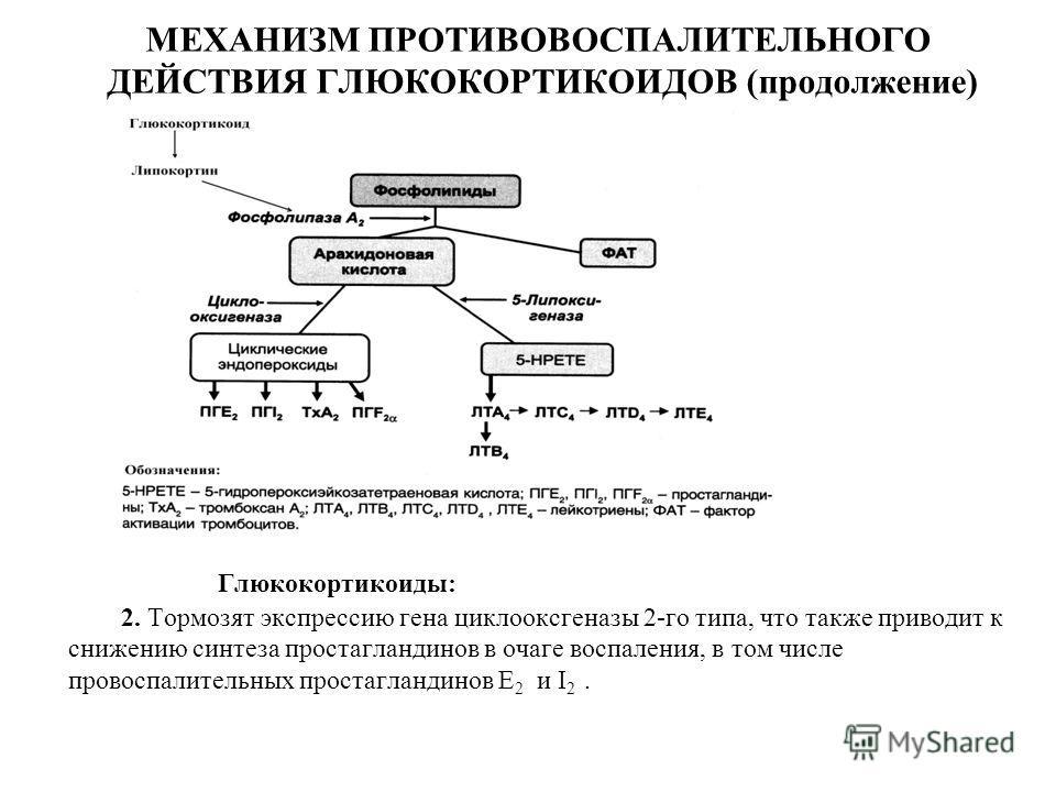 МЕХАНИЗМ ПРОТИВОВОСПАЛИТЕЛЬНОГО ДЕЙСТВИЯ ГЛЮКОКОРТИКОИДОВ (продолжение) Глюкокортикоиды: 2. Тормозят экспрессию гена циклооксгеназы 2-го типа, что также приводит к снижению синтеза простагландинов в очаге воспаления, в том числе провоспалительных про