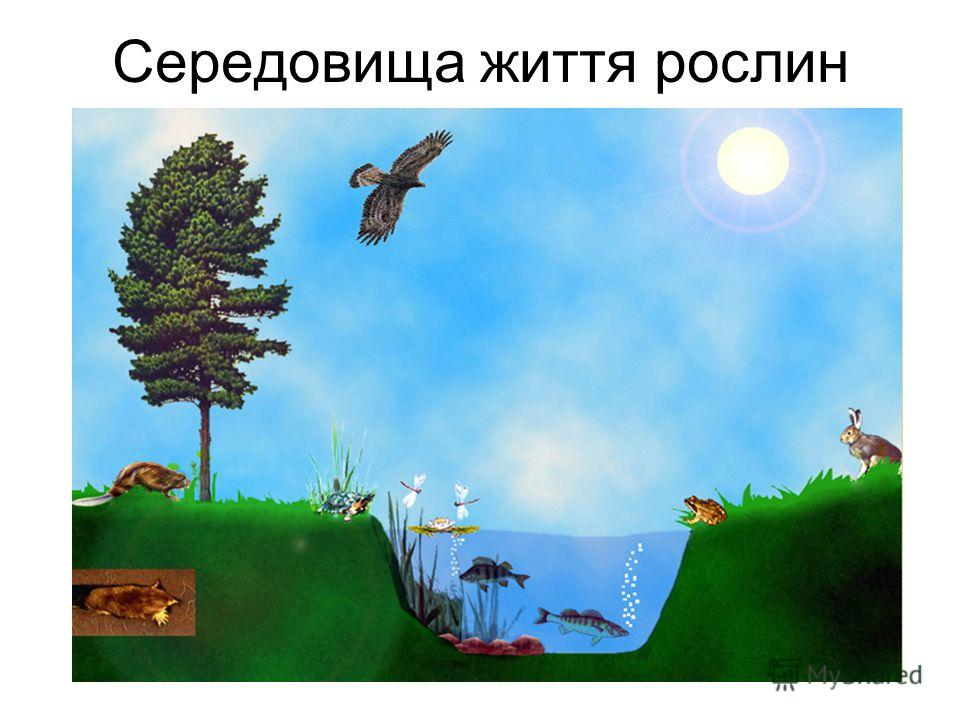 Середовища життя рослин