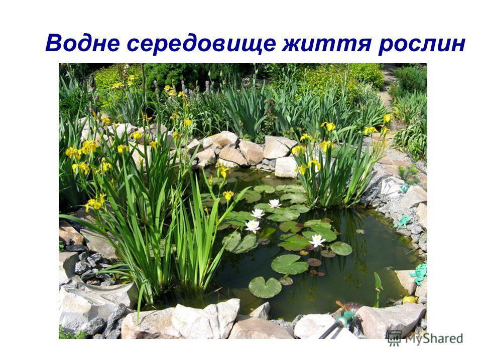 Водне середовище життя рослин