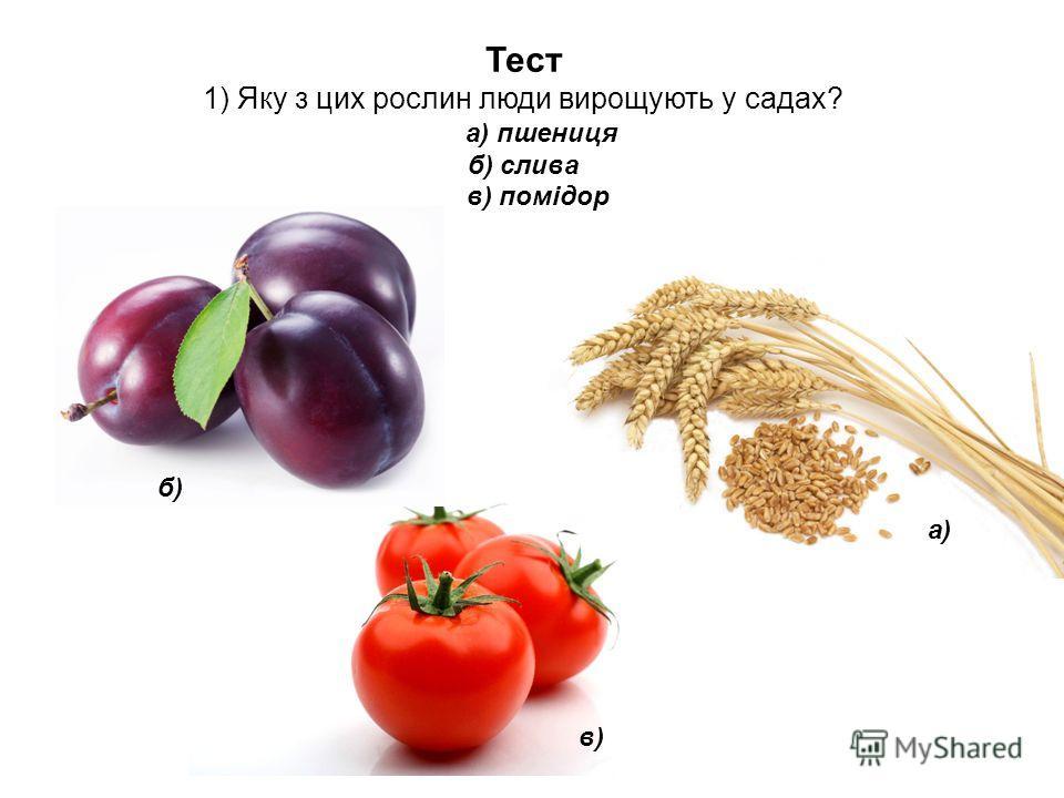 Тест 1) Яку з цих рослин люди вирощують у садах? а) пшениця б) слива в) помідор а) б) в)