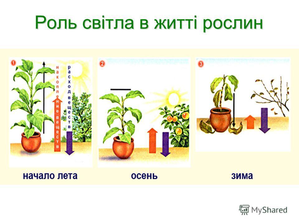 Роль світла в житті рослин