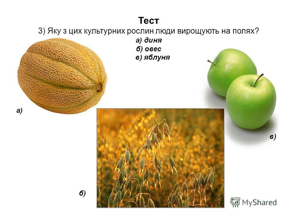 Тест 3) Яку з цих культурних рослин люди вирощують на полях? а) диня б) овес в) яблуня а) б) в)