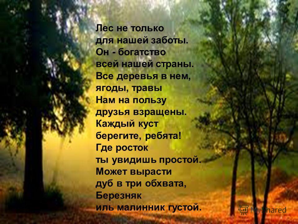 Лес не только для нашей заботы. Он - богатство всей нашей страны. Все деревья в нем, ягоды, травы Нам на пользу друзья взращены. Каждый куст берегите, ребята! Где росток ты увидишь простой. Может вырасти дуб в три обхвата, Березняк иль малинник густо
