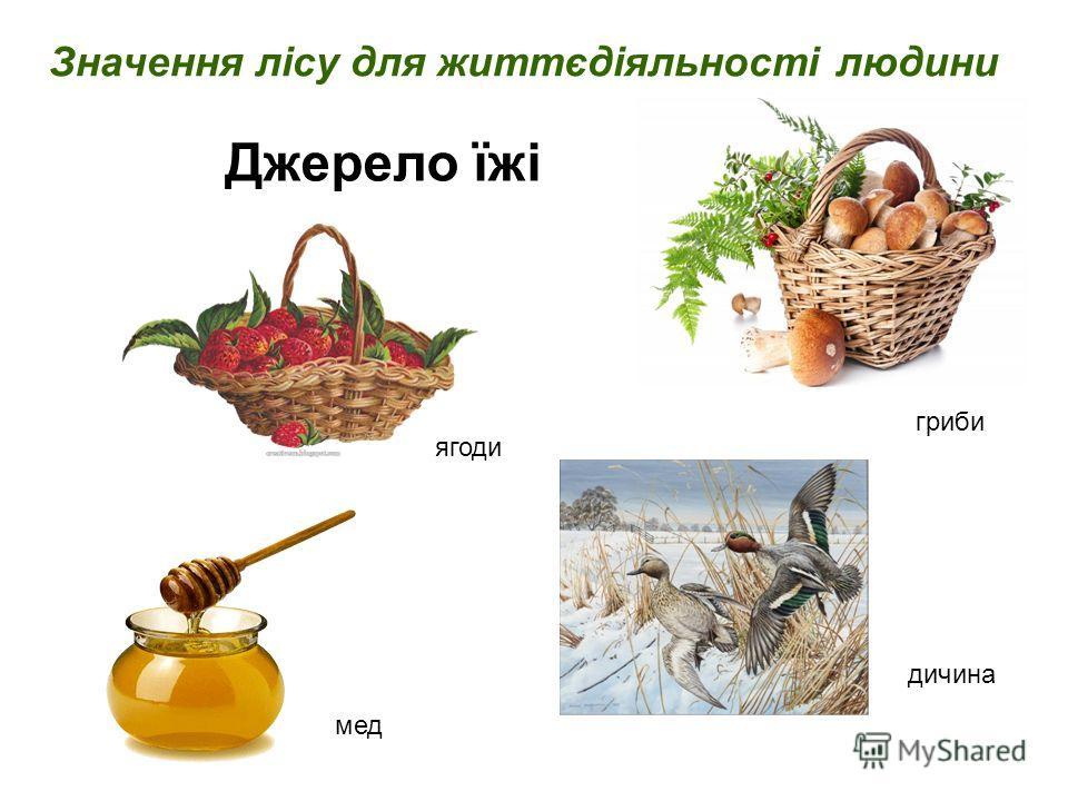 Значення лісу для життєдіяльності людини Джерело їжі мед гриби ягоди дичина