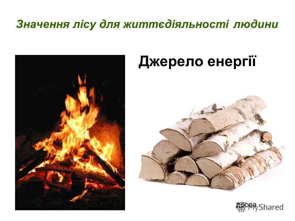 Джерело енергії Значення лісу для життєдіяльності людини дрова
