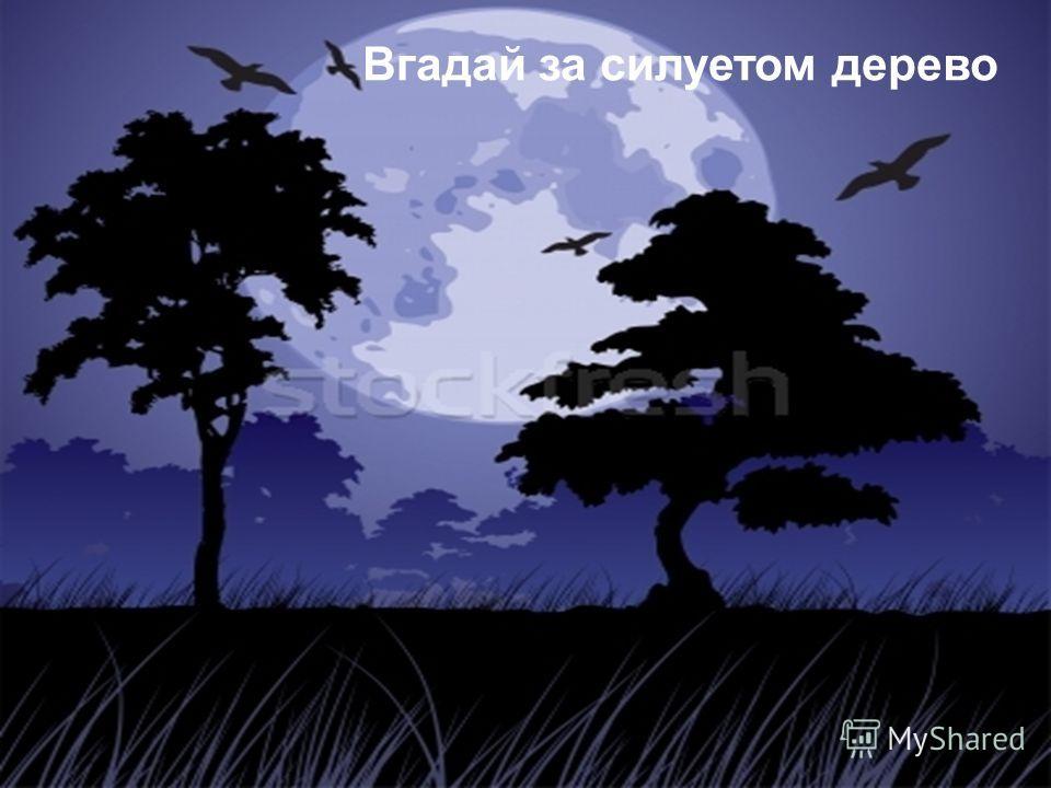 Вгадай за силуетом дерево