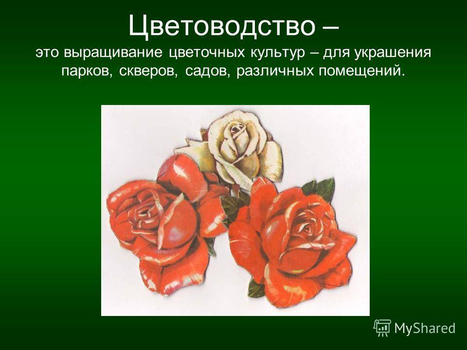 Цветоводство – это выращивание цветочных культур – для украшения парков, скверов, садов, различных помещений.