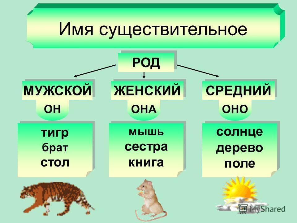 Имя существительное Одушевлённые Кто? Неодушевлённые Что? девочка, кошка, медведь девочка, кошка, медведь дом, часы, машина дом, часы, машина