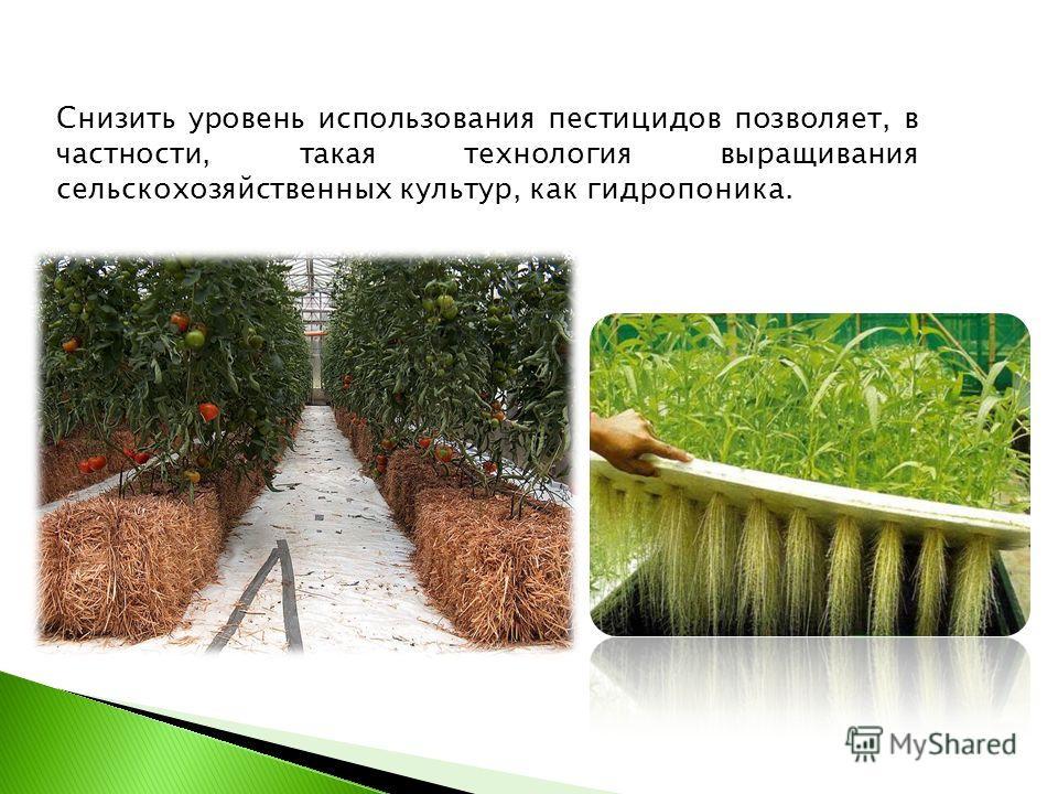 Снизить уровень использования пестицидов позволяет, в частности, такая технология выращивания сельскохозяйственных культур, как гидропоника.