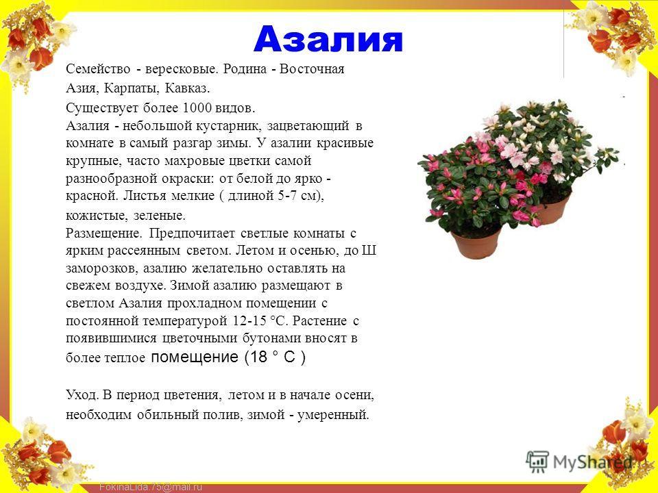 FokinaLida.75@mail.ru Азалия Семейство - вересковые. Родина - Восточная Азия, Карпаты, Кавказ. Существует более 1000 видов. Азалия - небольшой кустарник, зацветающий в комнате в самый разгар зимы. У азалии красивые крупные, часто махровые цветки само