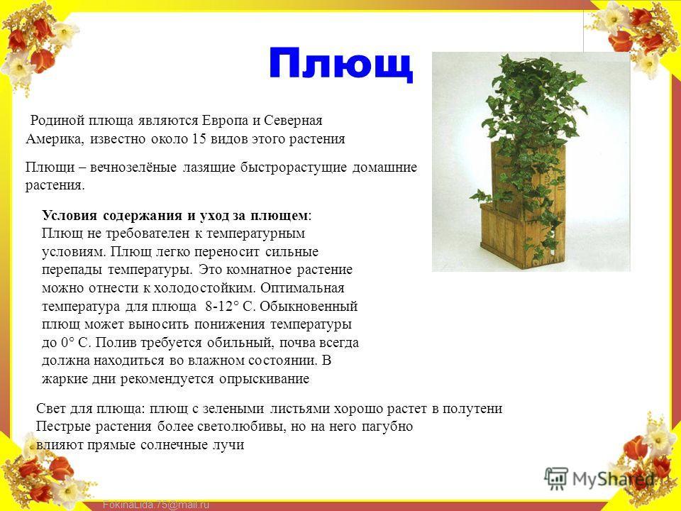 FokinaLida.75@mail.ru Плющ Родиной плюща являются Европа и Северная Америка, известно около 15 видов этого растения Плющи – вечнозелёные лазящие быстрорастущие домашние растения. Условия содержания и уход за плющем: Плющ не требователен к температурн