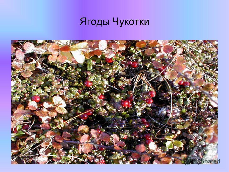Ягоды Чукотки