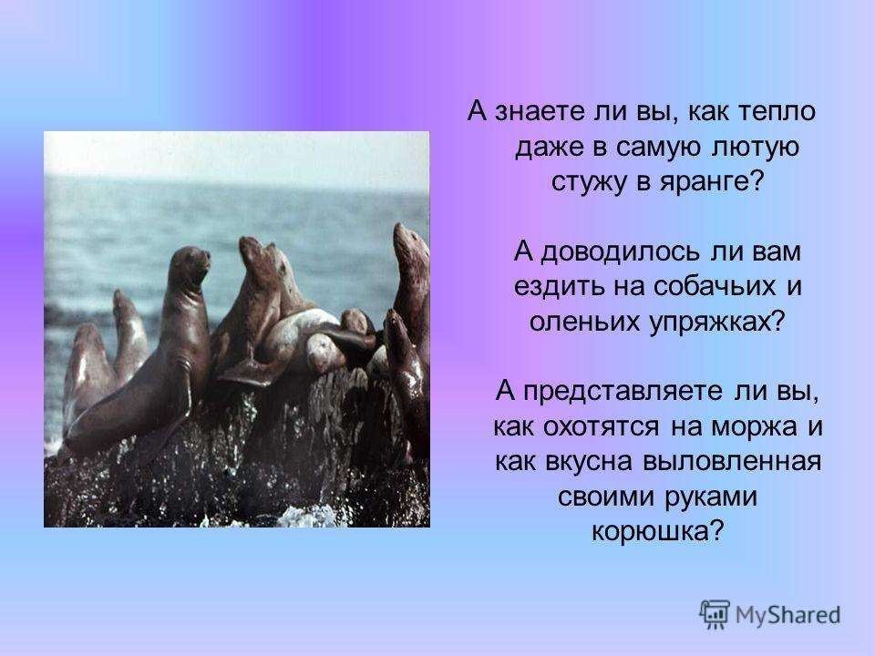 А знаете ли вы, как тепло даже в самую лютую стужу в яранге? А доводилось ли вам ездить на собачьих и оленьих упряжках? А представляете ли вы, как охотятся на моржа и как вкусна выловленная своими руками корюшка?