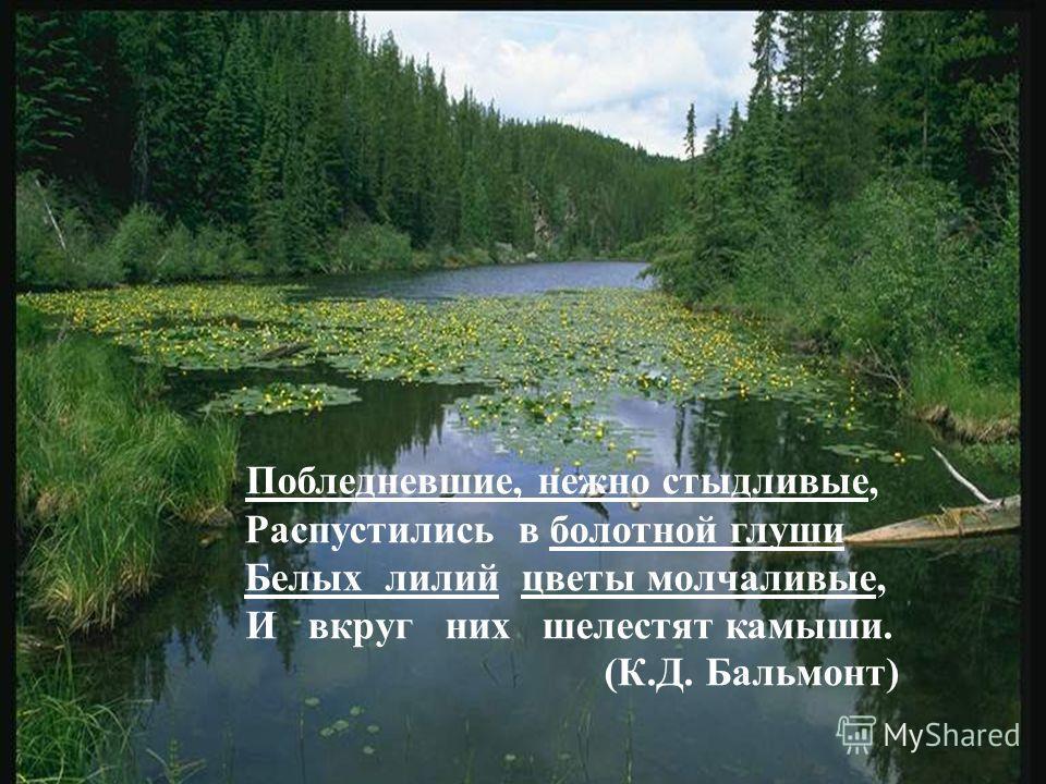 Побледневшие, нежно стыдливые, Распустились в болотной глуши Белых лилий цветы молчаливые, И вкруг них шелестят камыши. (К.Д. Бальмонт)