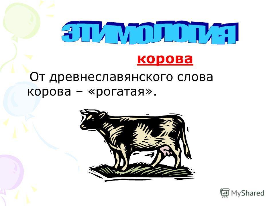 корова От древнеславянского слова корова – «рогатая».