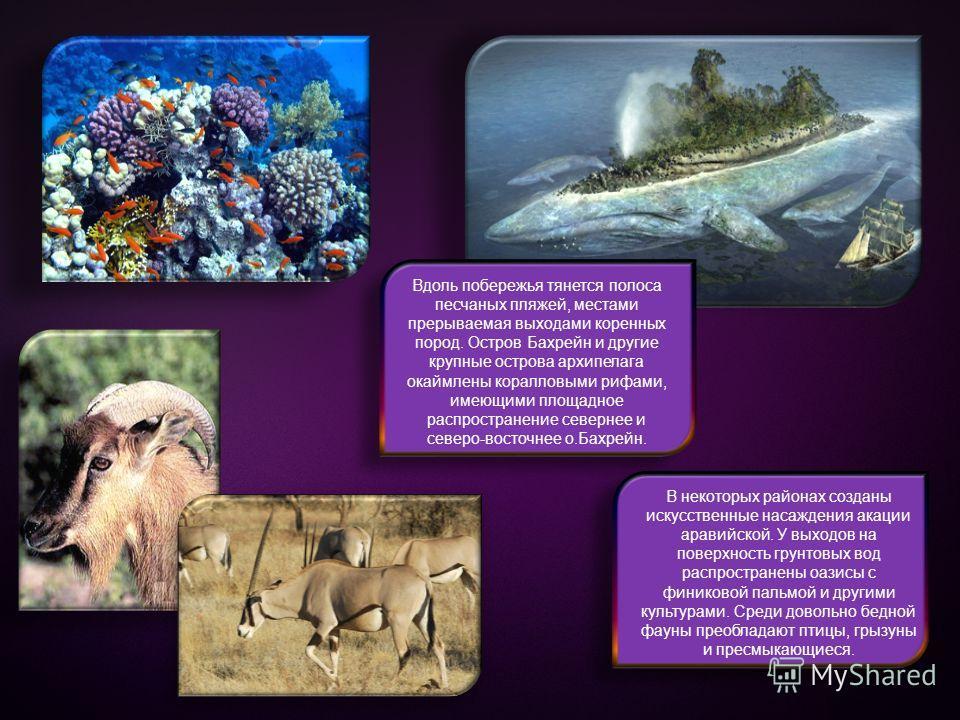 Вдоль побережья тянется полоса песчаных пляжей, местами прерываемая выходами коренных пород. Остров Бахрейн и другие крупные острова архипелага окаймлены коралловыми рифами, имеющими площадное распространение севернее и северо-восточнее о.Бахрейн. В