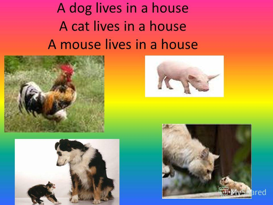 A dog lives in a house A cat lives in a house A mouse lives in a house