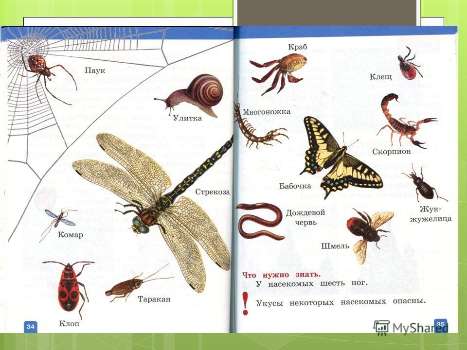ПризнакиЕстьНет 6 ног 3 части тела (голова, грудь, брюшко) насечки Название животного ________________________________ Заключение: Это – насекомое? Да Нет