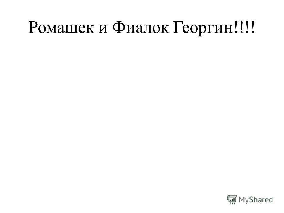 Ромашек и Фиалок Георгин!!!!