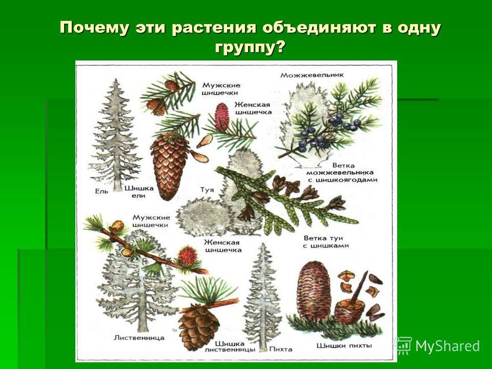 Почему эти растения объединяют в одну группу?