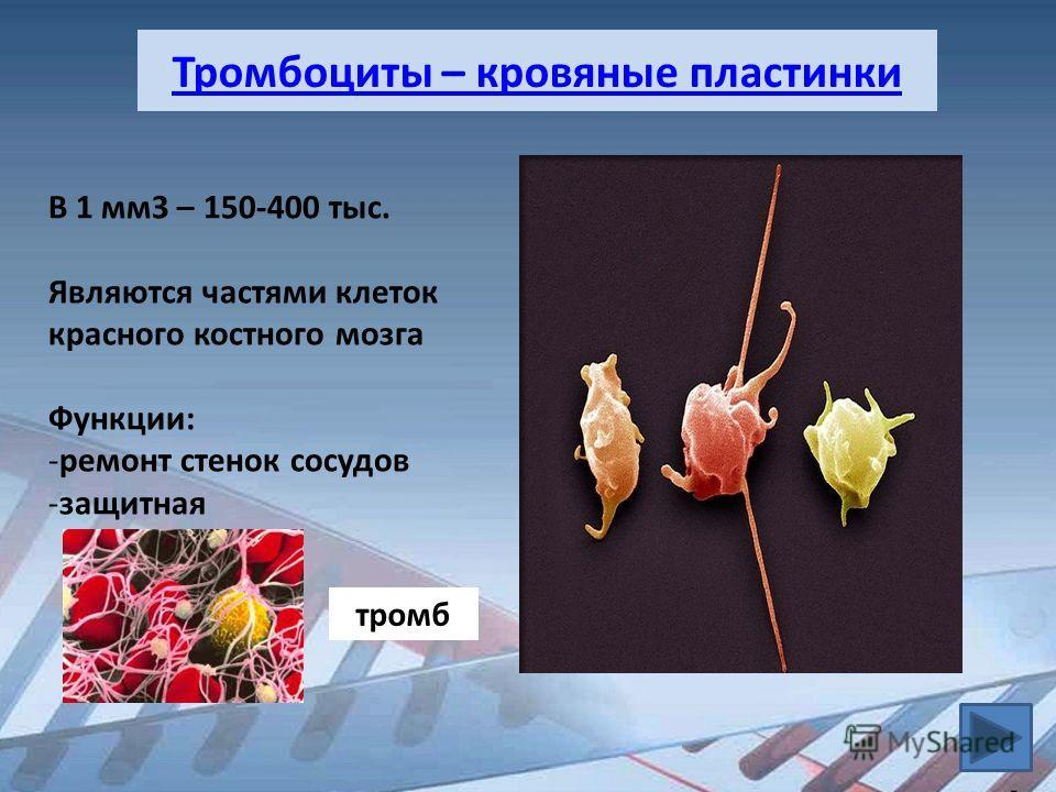 Тромбоциты – кровяные пластинки В 1 мм3 – 150-400 тыс. Являются частями клеток красного костного мозга Функции: -ремонт стенок сосудов -защитная тромб