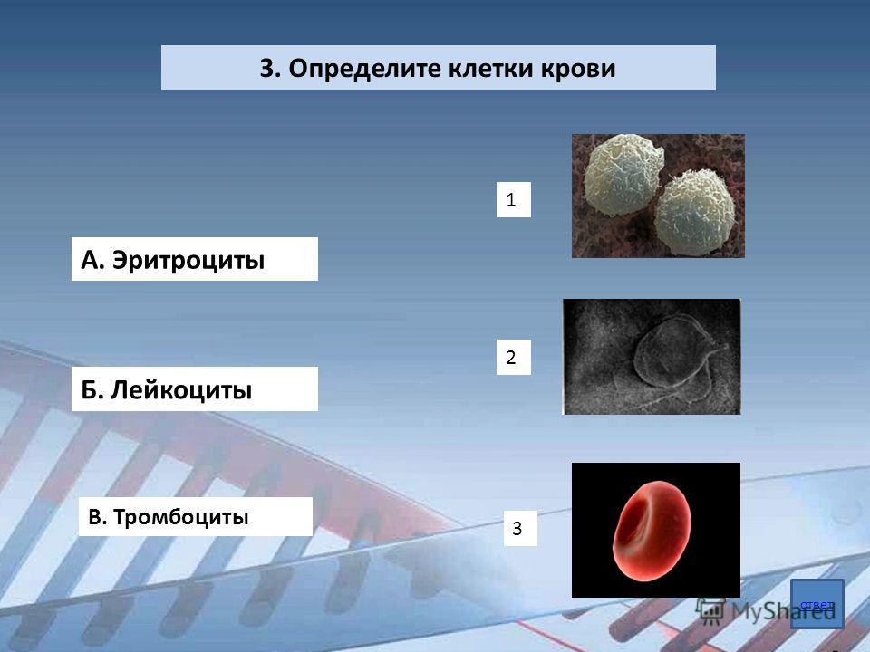 3. Определите клетки крови А. Эритроциты Б. Лейкоциты В. Тромбоциты 1 2 3 ответ