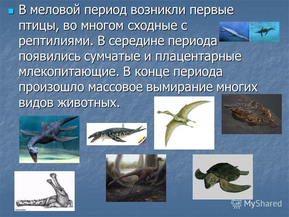 В меловой период возникли первые птицы, во многом сходные с рептилиями. В середине периода появились сумчатые и плацентарные млекопитающие. В конце периода произошло массовое вымирание многих видов животных. В меловой период возникли первые птицы, во