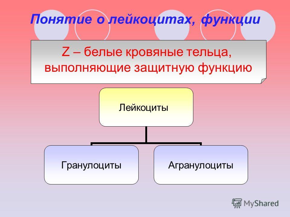 Понятие о лейкоцитах, функции Лейкоциты ГранулоцитыАгранулоциты Z – белые кровяные тельца, выполняющие защитную функцию