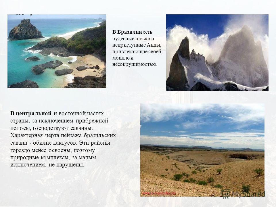 В центральной и восточной частях страны, за исключением прибрежной полосы, господствуют саванны. Характерная черта пейзажа бразильских саванн - обилие кактусов. Эти районы гораздо менее освоены, поэтому природные комплексы, за малым исключением, не н