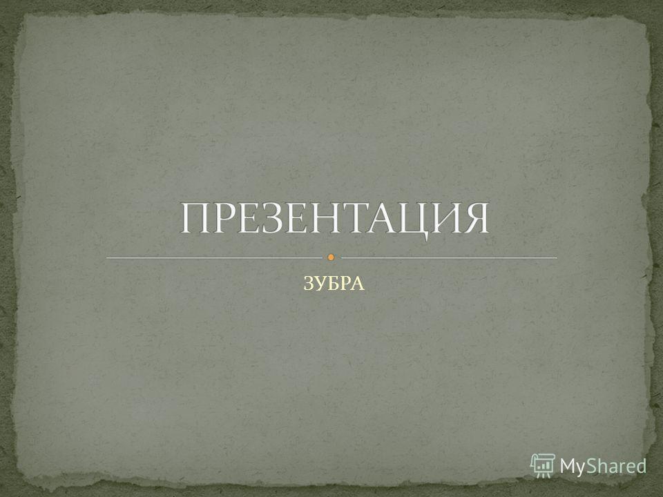 ЗУБРА