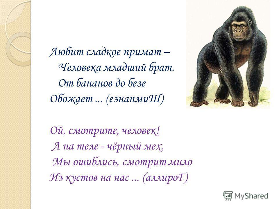 Любит сладкое примат – Человека младший брат. От бананов до безе Обожает... (езнапмиШ) Ой, смотрите, человек! А на теле - чёрный мех. Мы ошиблись, смотрит мило Из кустов на нас... (аллироГ)