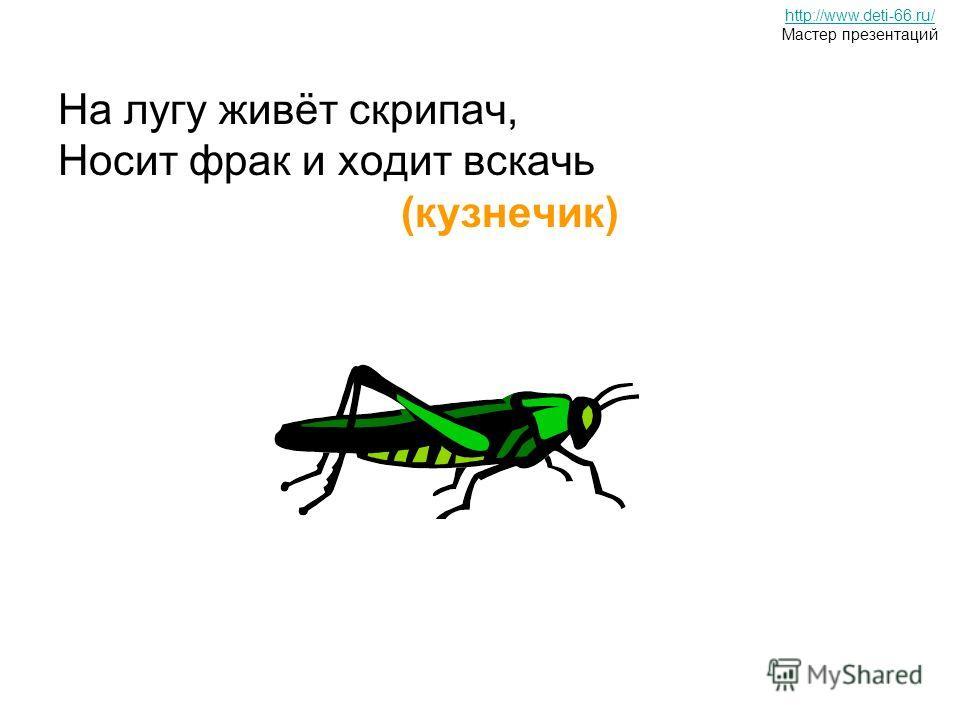 На лугу живёт скрипач, Носит фрак и ходит вскачь (кузнечик) http://www.deti-66.ru/ Мастер презентаций